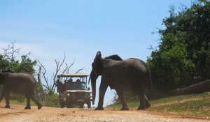 Elefant, Chobe-Nationalpark